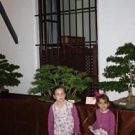 FIESTA-DE-LOS-PATIOS-020